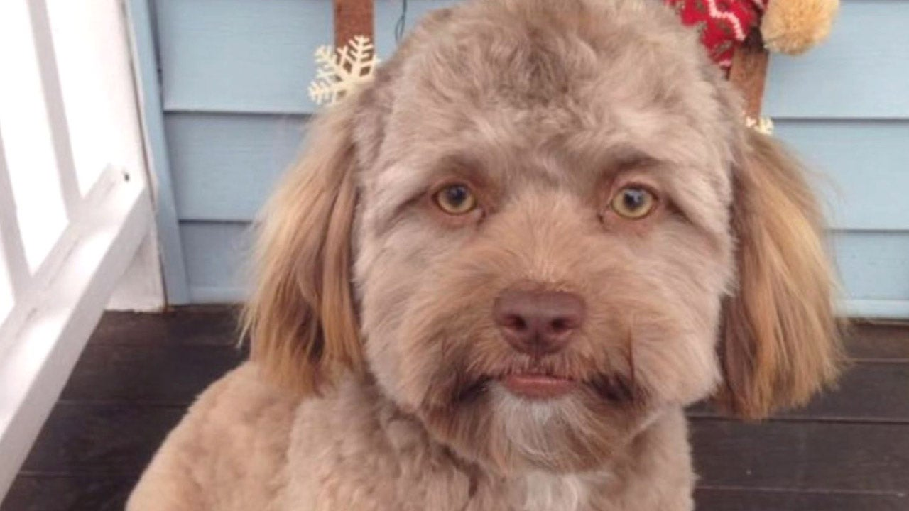 Does This Dog Look Like Jake Gyllenhaal Inside Edition