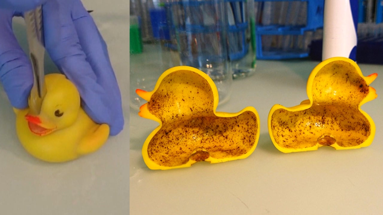 See The Gross Bacteria Lurking In Your Rubber Ducky