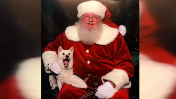Dog Obsessed With Santa Claus Can T Stop Smiling When