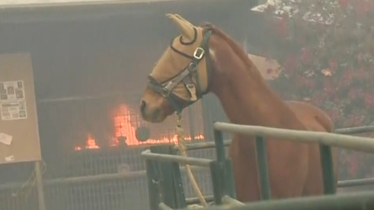 Horses Evacuated After Suffering Severe Burns From