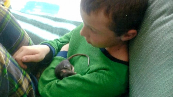 Pet Store Found Not Responsible After 10 Year Old Boy Dies Of Rat Fever Inside Edition