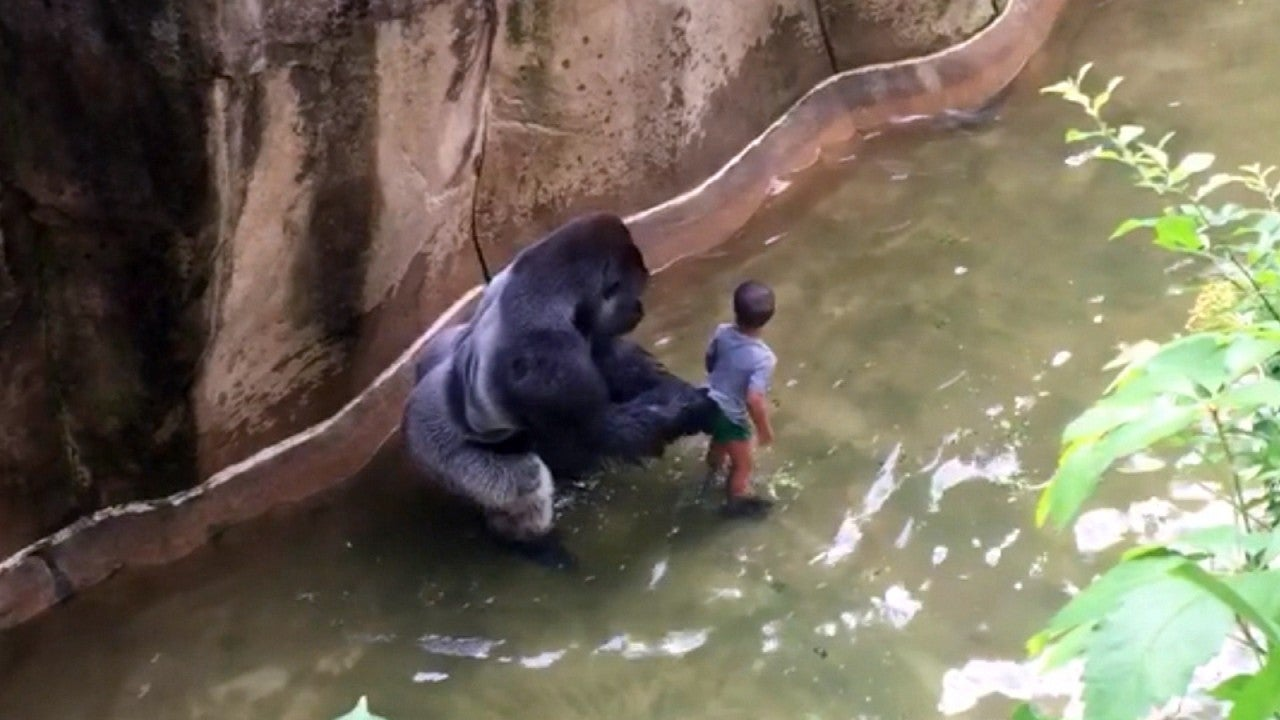 Mom Of Boy Who Fell Into Gorilla Enclosure I Watch On My