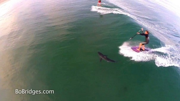 Great White Shark Hovers Under Paddle Boarders | Inside ...