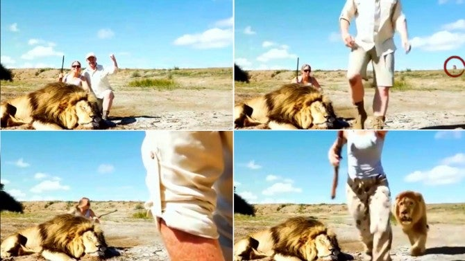 Is This Video of a Lion Attacking Proud Trophy Hunters Real