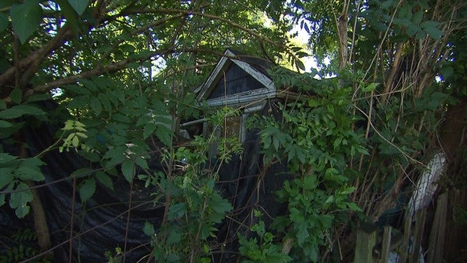 house of horrors  home that u0026 39 s overrun with weeds and trash