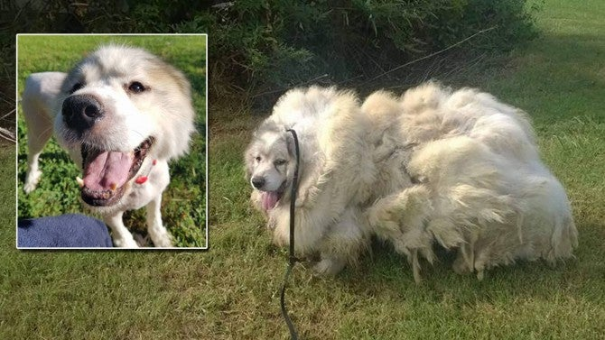 7 Year Old Dog Rescued From Small Barn After Years of
