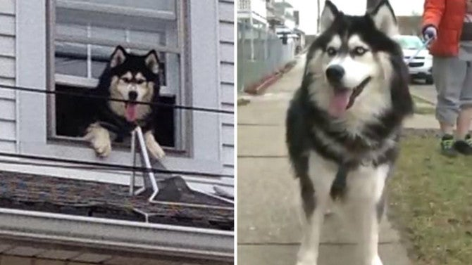 Firefighters Rescue 150 Pound Dog From Rooftop Twice In
