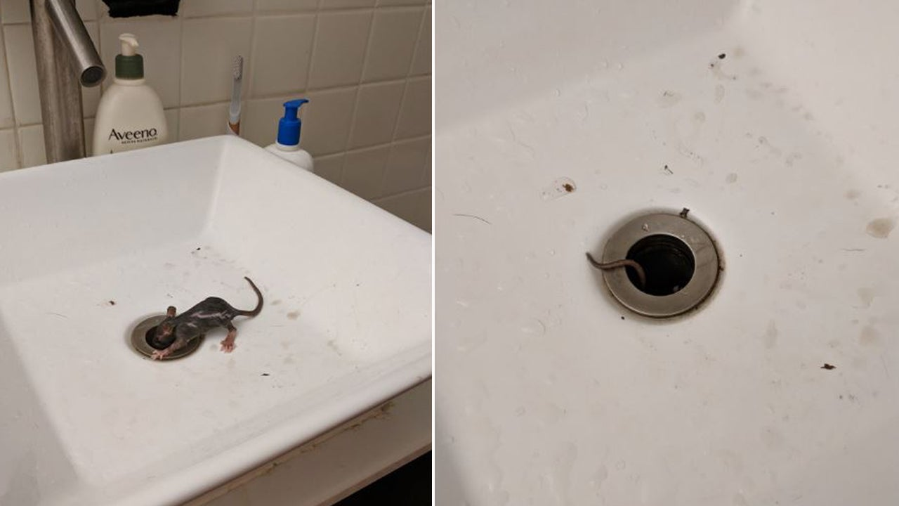 New York City Couple Freaks As Rat Crawls Out Of Bathroom