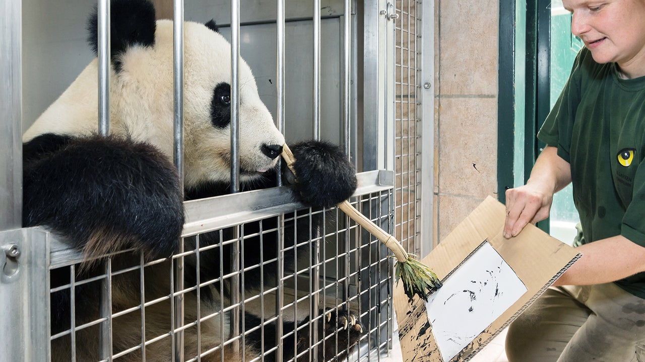 yang yang the panda is painting pictures for a good cause