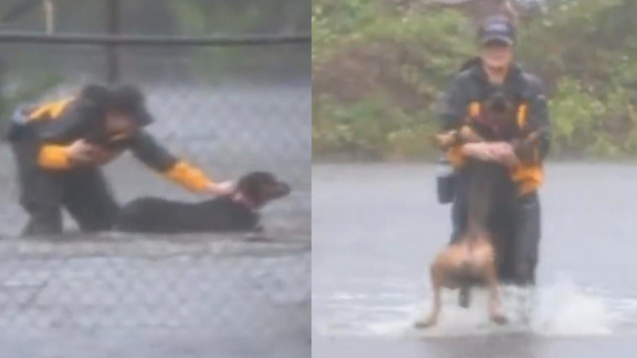 Reporter Covering Hurricane Florence Rescues Dogs In North