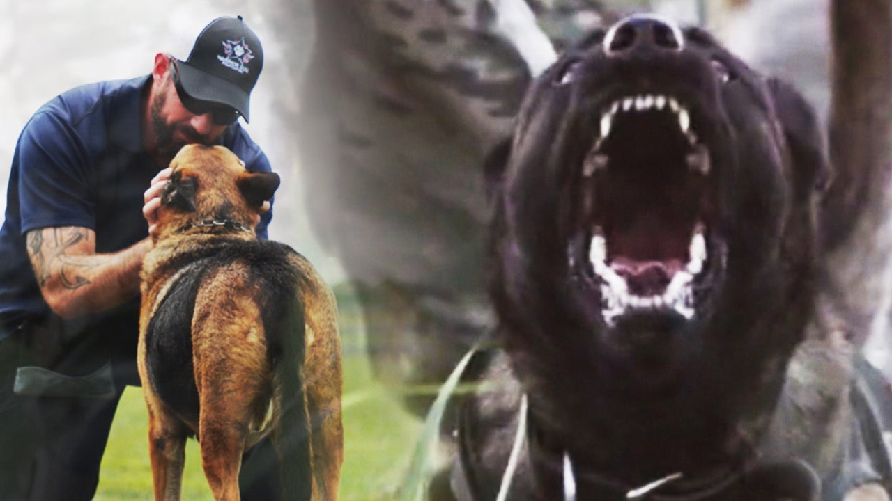The Warrior Dog Foundation Saving Service Animals Scarred By Battle