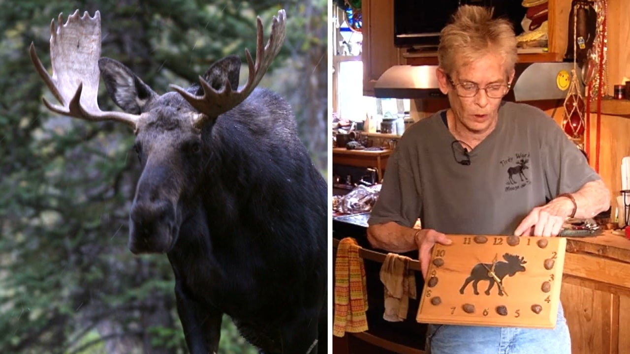 maine artist goes viral for her sculptures made of moose