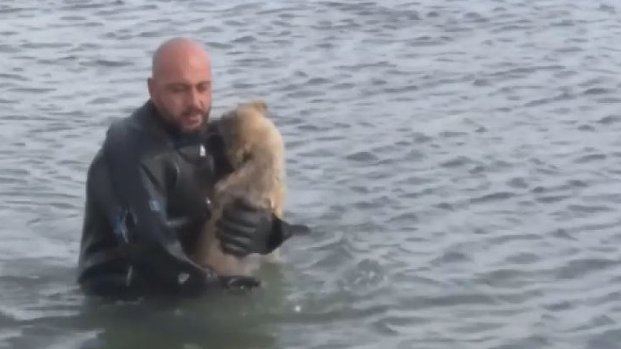 Puppy Rescued From Frozen Lake in Turkey by Police Diver