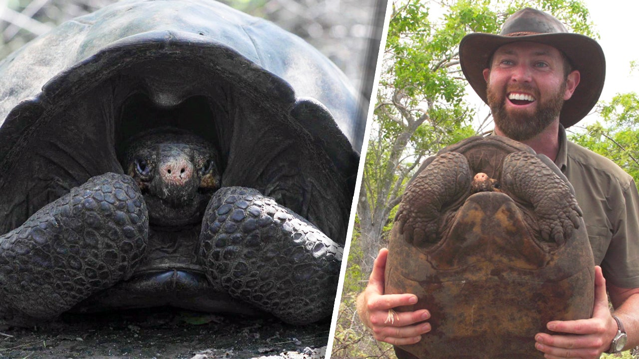 Scientists Discover Giant Tortoise Thought to Be Extinct for