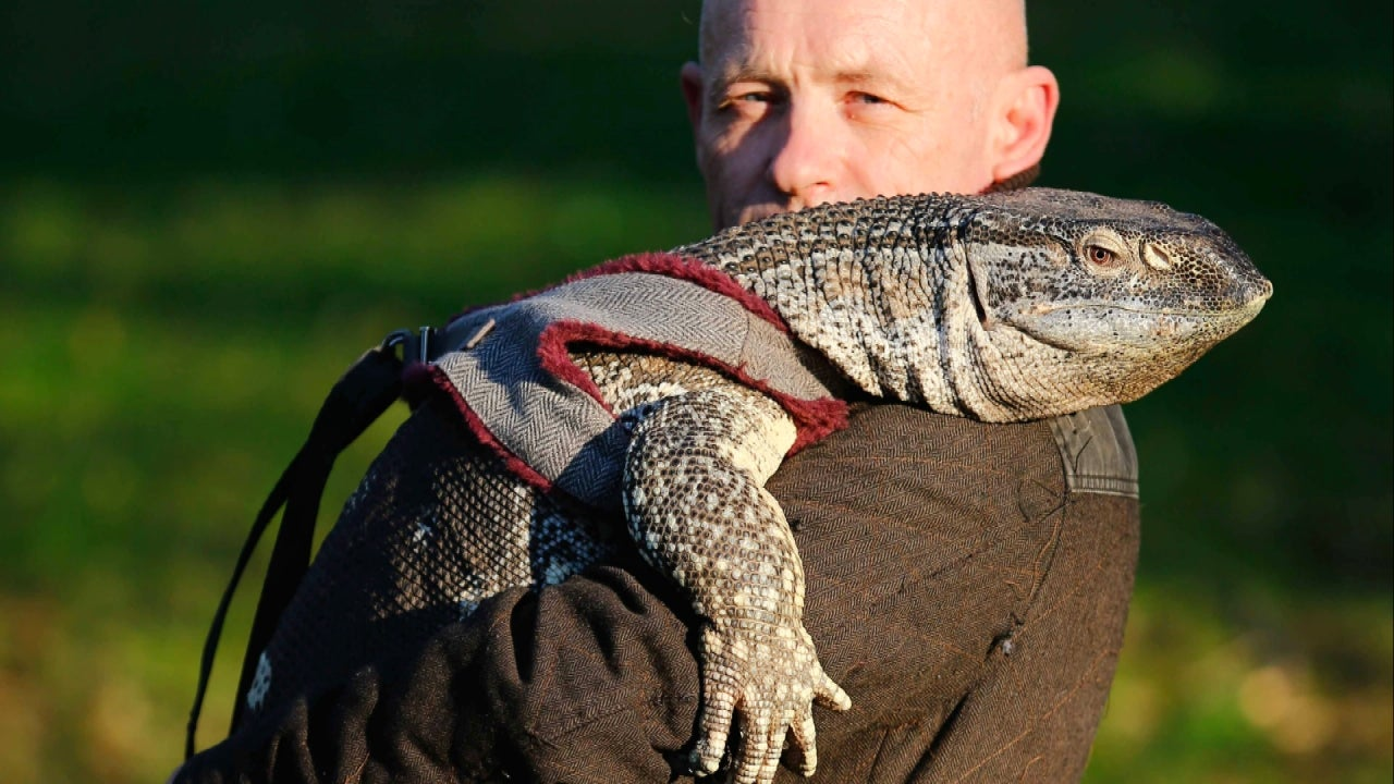 Uber With Kids >> Giant Lizard Allowed to Stroll English Park on a Leash | Inside Edition