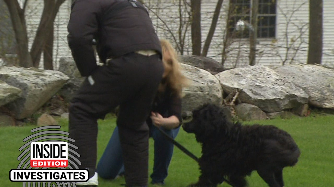 Will Your Dog Defend You If You're Attacked on a Walk?