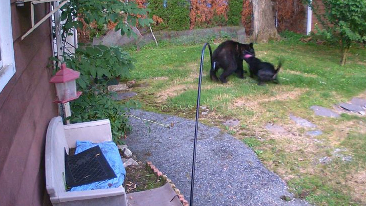 New Jersey Dog Chases Bear in Neighbor's Garden | Inside Edition