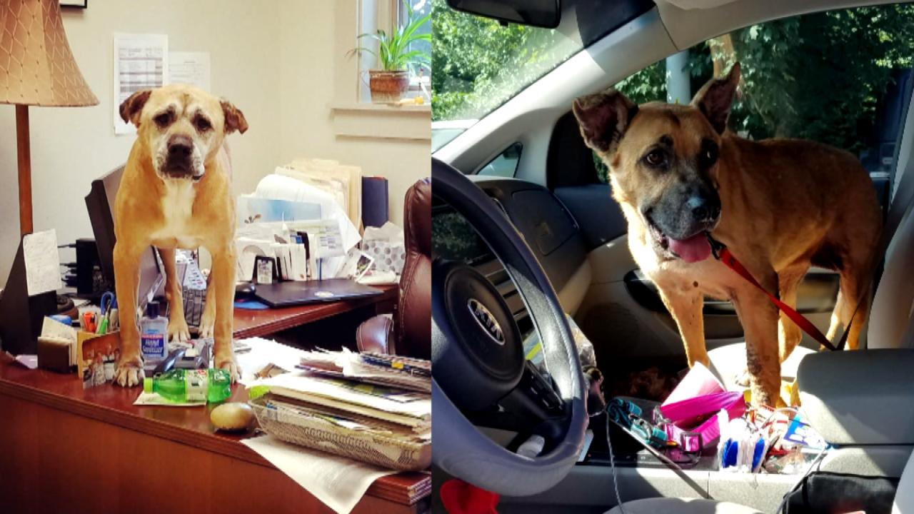 Woman Adopts 2 Dogs Who Have Been at Animal Shelter the Longest to Give Them 'the Best Years'