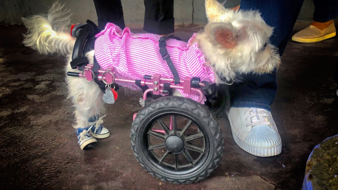 Dogs With Special Needs and Their Humans Celebrate for a Good Cause in New York