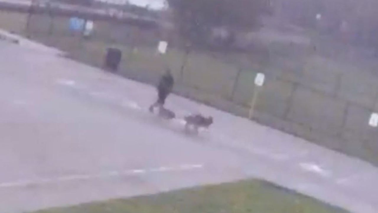 Man Struck by Lightning While Walking Dogs Is Reunited With His German Shepherds