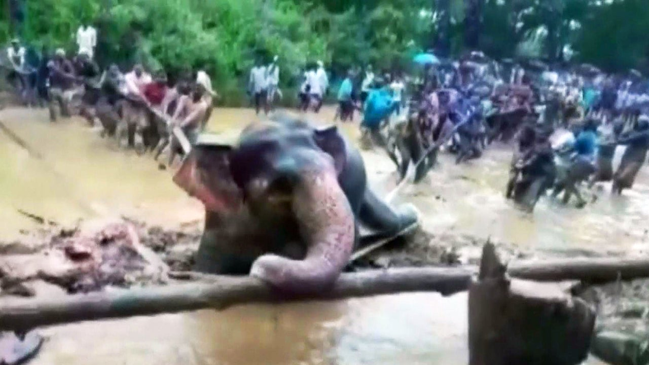 Elephant Struggles in Swamp, but Village Bands Together to Rescue It