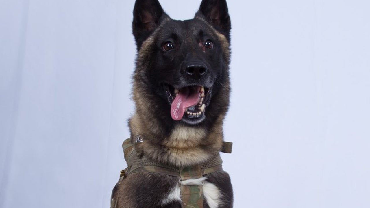 Who is the Brave Dog That Helped Take Down ISIS Leader?