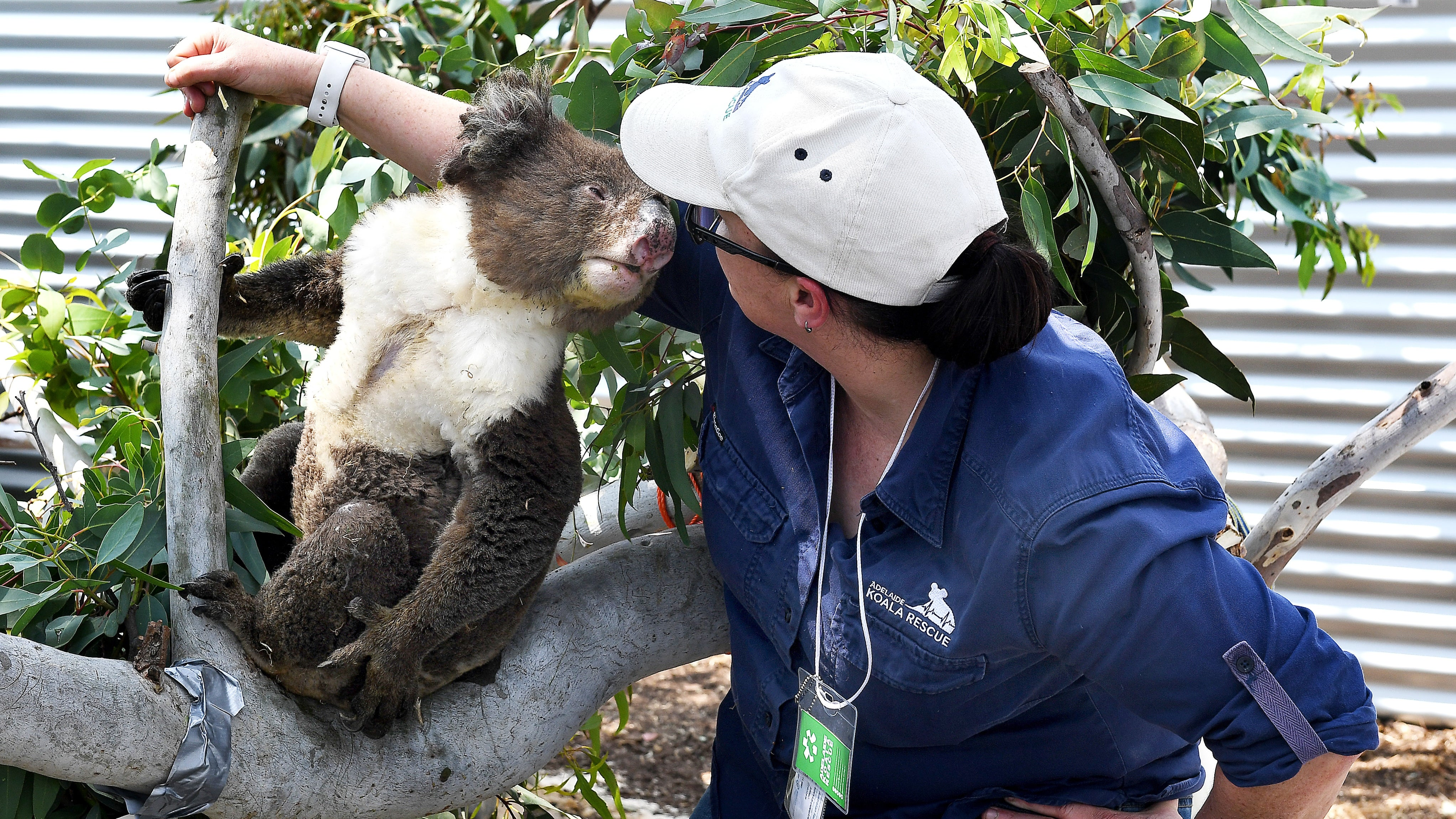 Meet the Koalas, Kangaroos and Other Animals Who Need Help in Australia's Wildfires