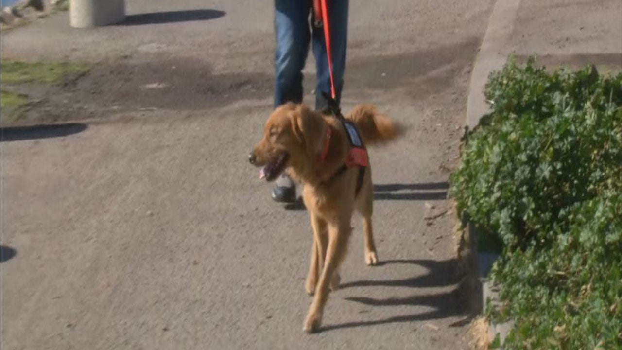 How a Golden Retriever Saved Elderly Couple Lost in California Woods for Eight Days