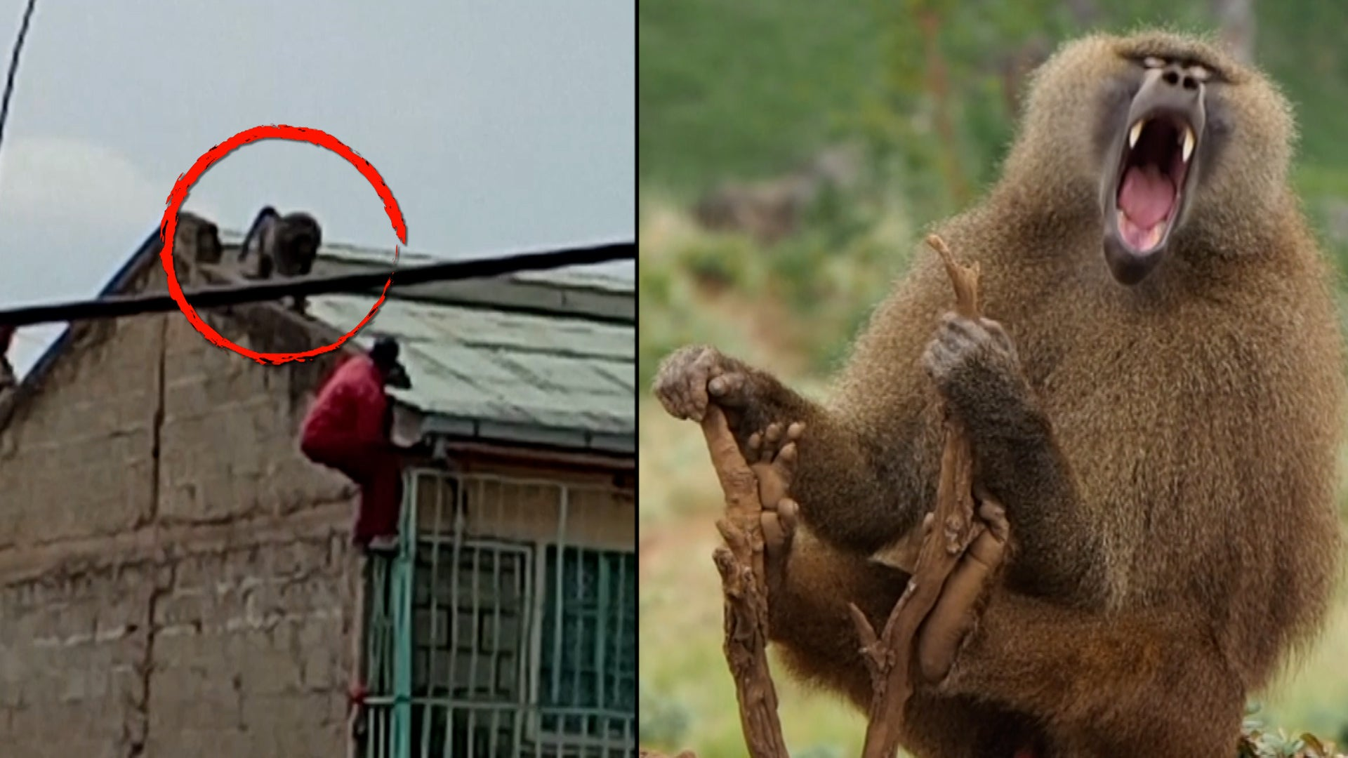 Baboon Attacks, Gnu Migrations and Other Close Encounters With African Wildlife