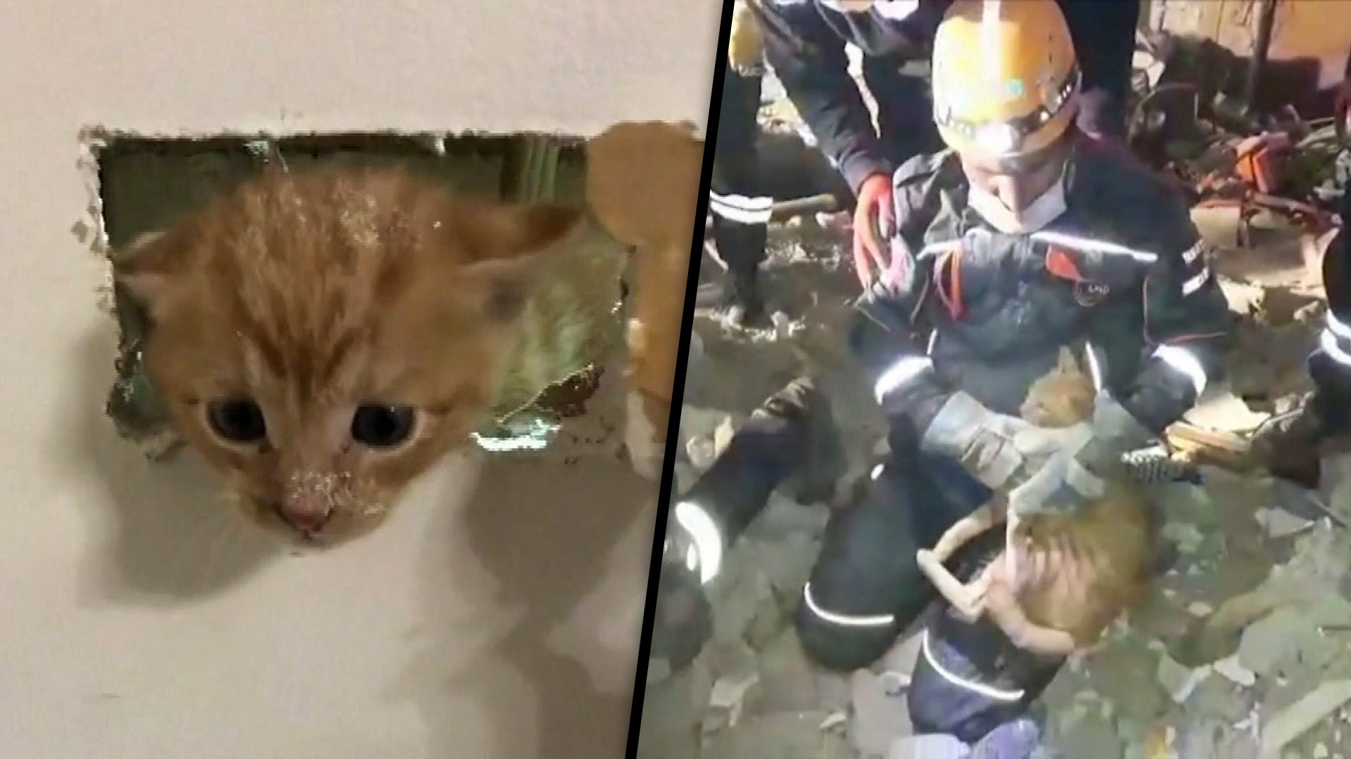Kitten Saved Behind Wall And Cat Pulled From Rubble In Amazing Rescues Inside Edition