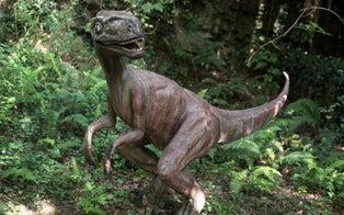 Florida Woman Believes She Saw 'Baby Dinosaur' Running Through Her Yard