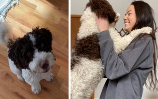 Chicago Woman Says Her Stolen Dog May Have Been Sold to New Jersey Couple