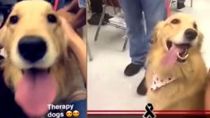 Comfort Dogs Help Students at Parkland School Heal as Students Return