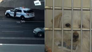 Pair of Pups Leads Cops on High-Speed Chase