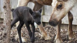 Baby Reindeer Born to Mama Named 'Bunny'