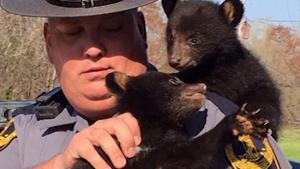 Cute Orphaned Cubs Get Some Bear Care at Wildlife Center