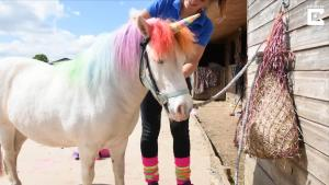 Woman Dyes Pony's Hair to Make It Look Like a Unicorn