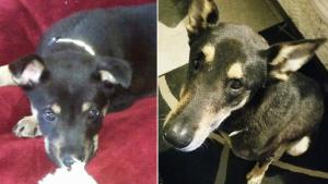 Woman Reunites With Dog That She Lost in California Desert 4 Years Ago