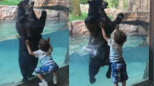 Bear Jumps to Mimic Boy at Nashville Zoo