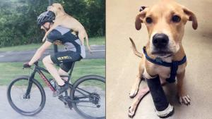 Georgia Man Bikes 7 Miles Carrying Injured Stray Puppy on His Back