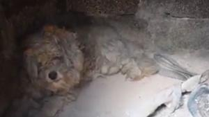 Dog Survived Wildfire in Greece by Hiding in Outdoor Brick Oven