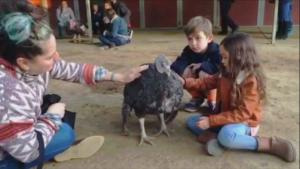 Guests Cuddle Turkeys at 'Gentle' Thanksgiving Celebration