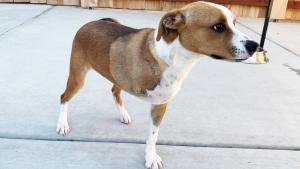 3-Legged Dog Named Champion Doing Well After Rescue From Alleged Hoarder's Home