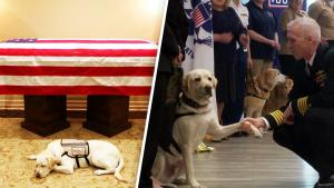 President George H.W. Bush's Service Dog Sully Finds New Home at Walter Reed