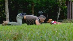 Rescue Amputee Dog Adopted by Vet Who Lost Leg in Iraq