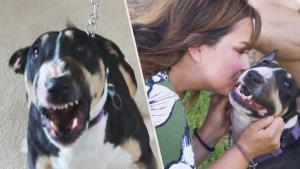 Dog Trainer Turns Snarling Ohio 'Devil Dog' Into a Little Angel