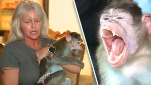 Missouri Woman Fights to Keep 3 Emotional Support Monkeys: 'They Saved Me'