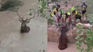 5 Cyclists Band Together to Pull Stranded Deer Out of Water