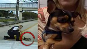 Florida Cop Rescues Stray Dog From Side of 6-Lane Highway