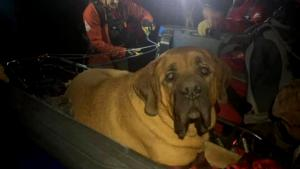 How a Nearly 200-Pound Dog and His Human Got Stuck on a Mountain